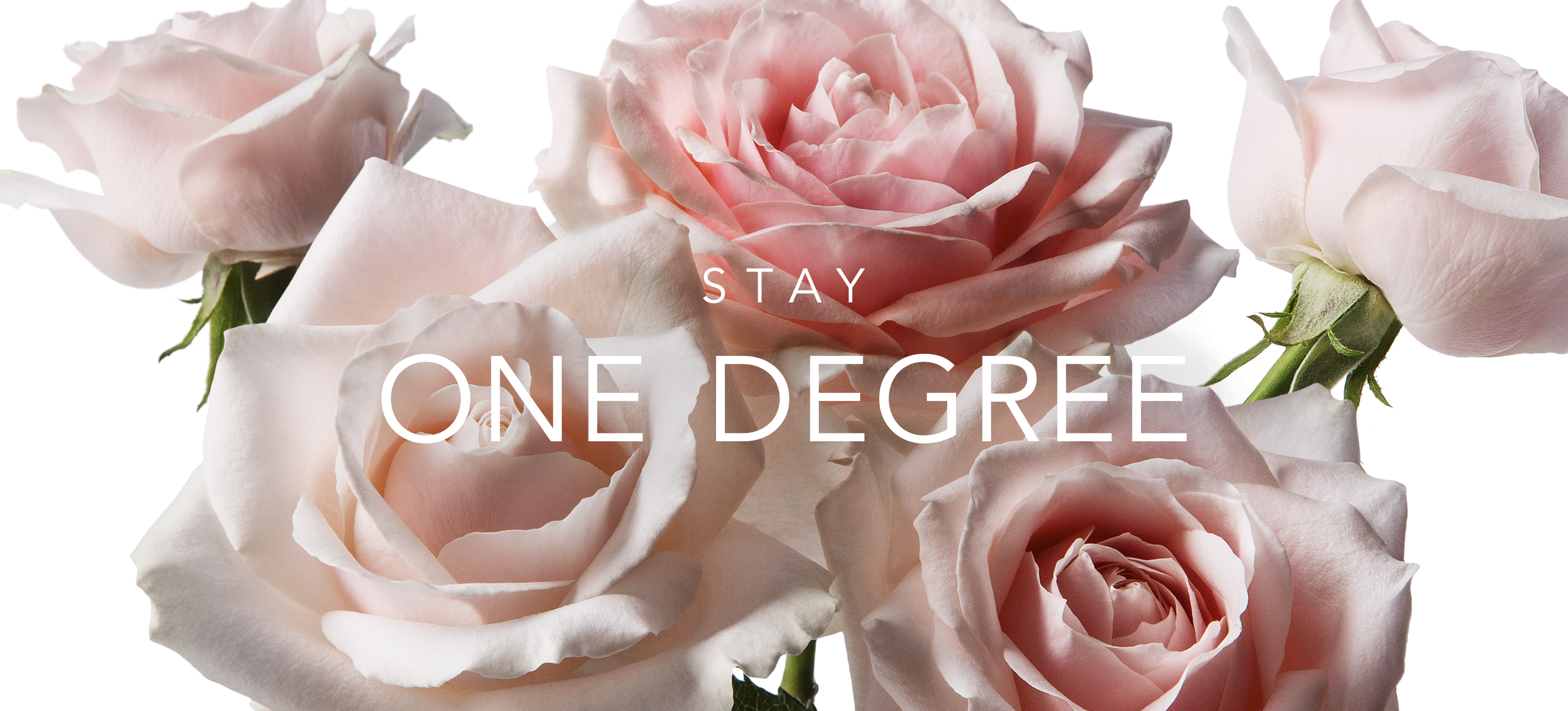 Stay One Degree Collection
