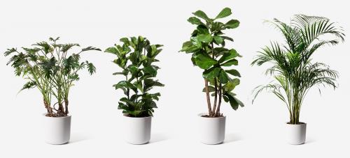 THE PLANT SHOP