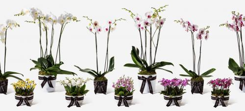 THE ORCHID SHOP