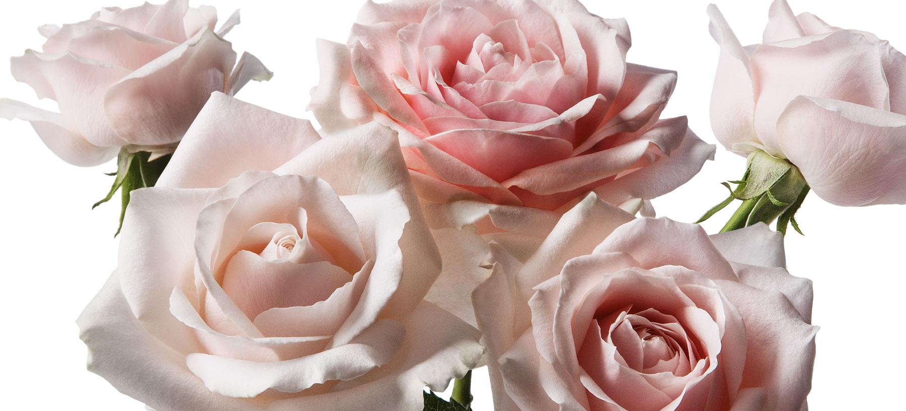 Michael Kors Mother's Day