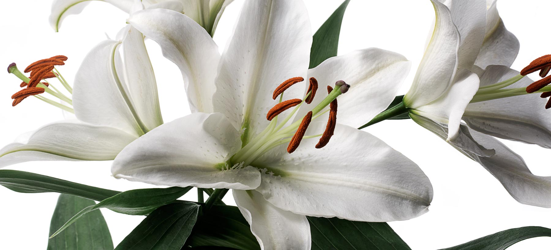 Long-Stem Deluxe Lily