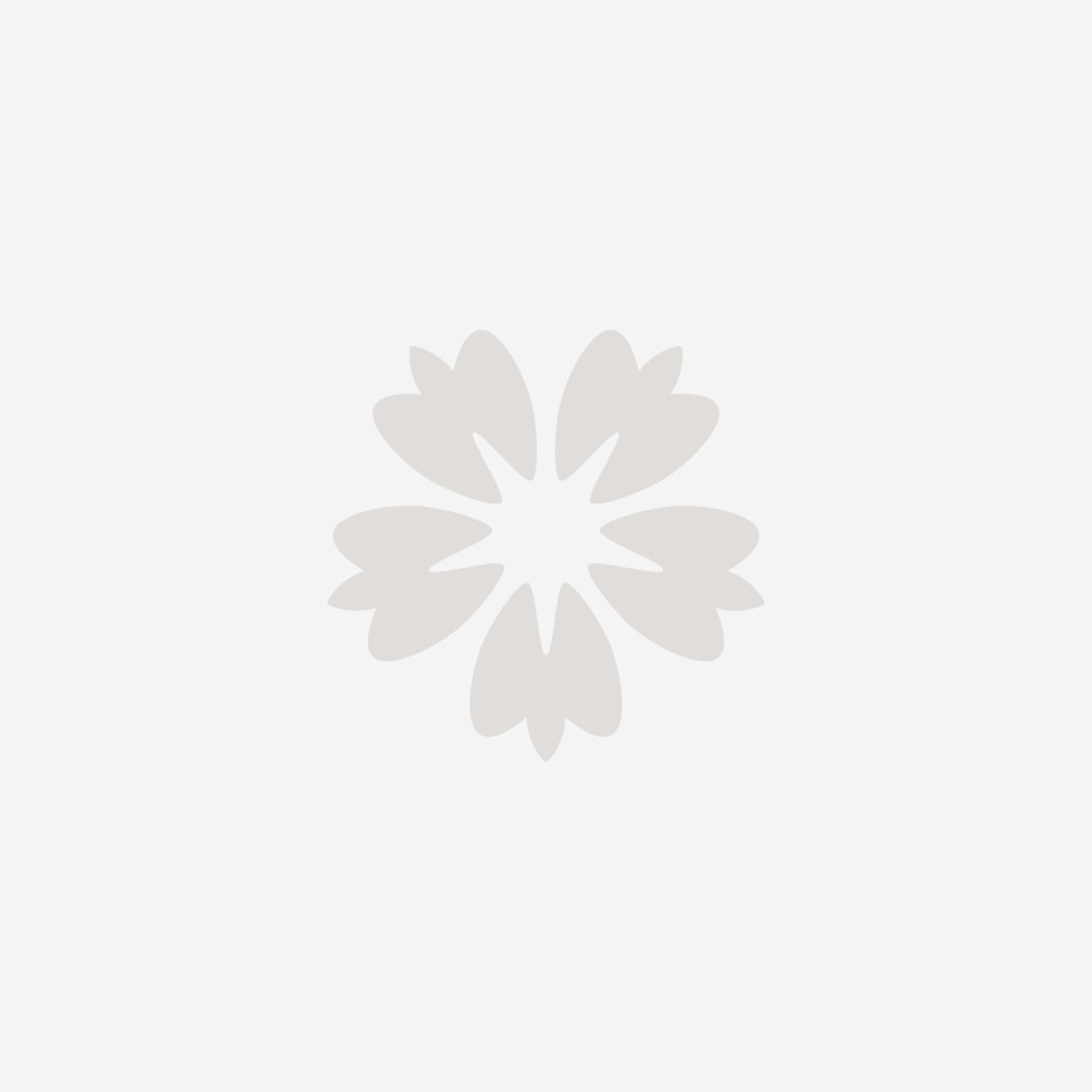 Pale Blush Cymbidium Cut Orchid