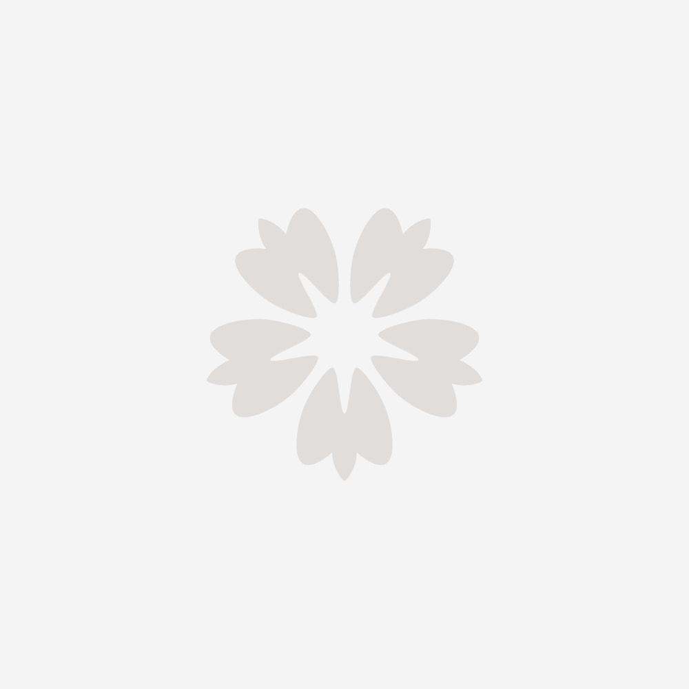 Small White Orchid - Dark