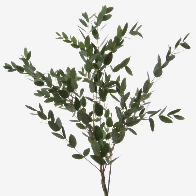 Green Parvifolia Eucalyptus Foliage