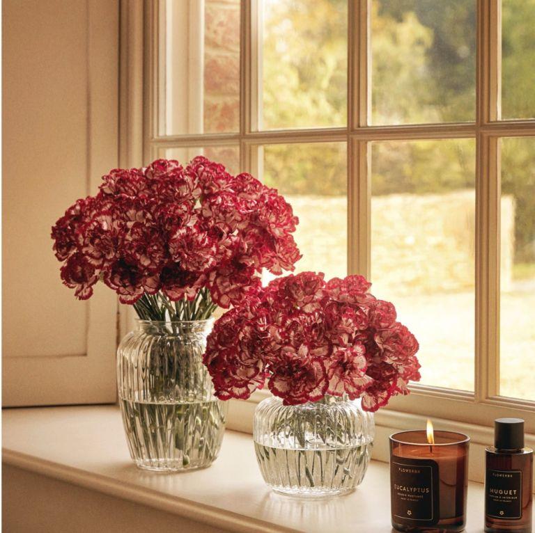 Oeillets Candy Cane et Vase