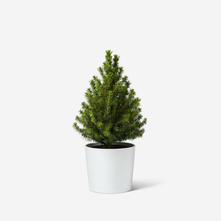 Mini Potted Tree