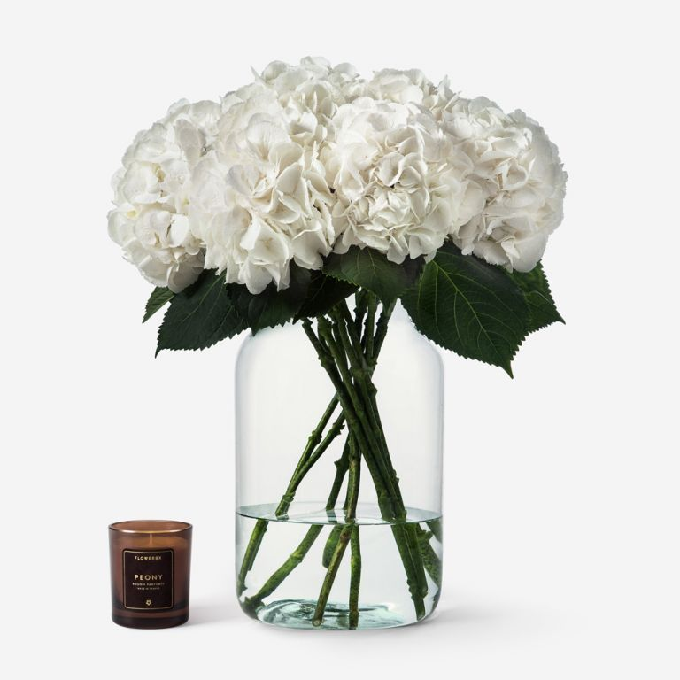 Vase Set Hydrangeas and Apothecary