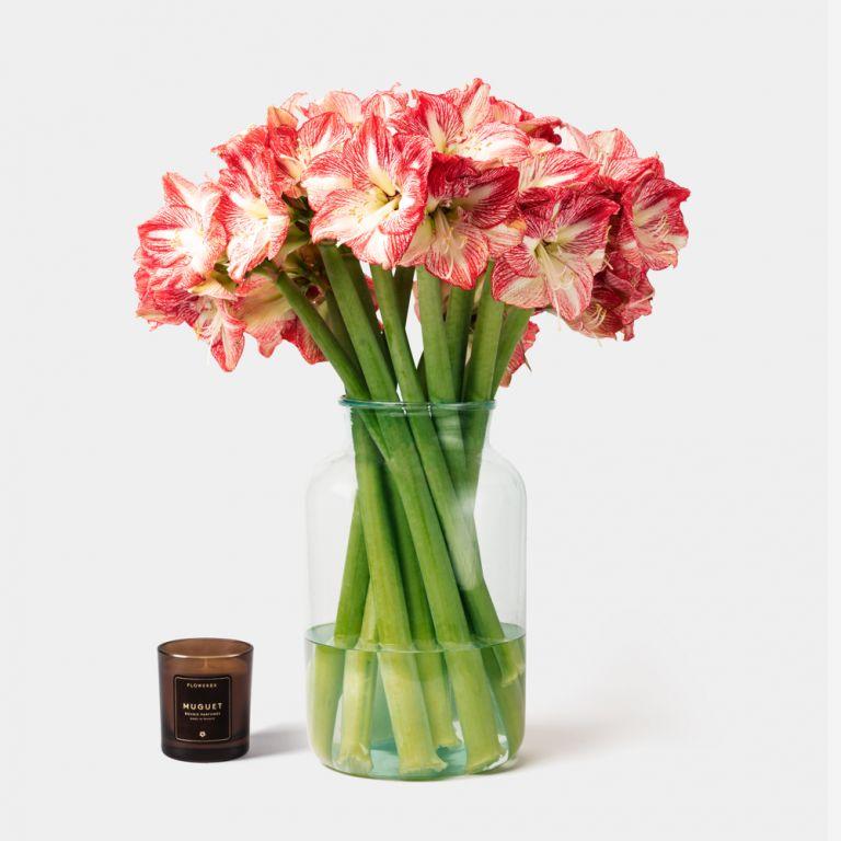 Large Apothecary Amaryllis Vase Set
