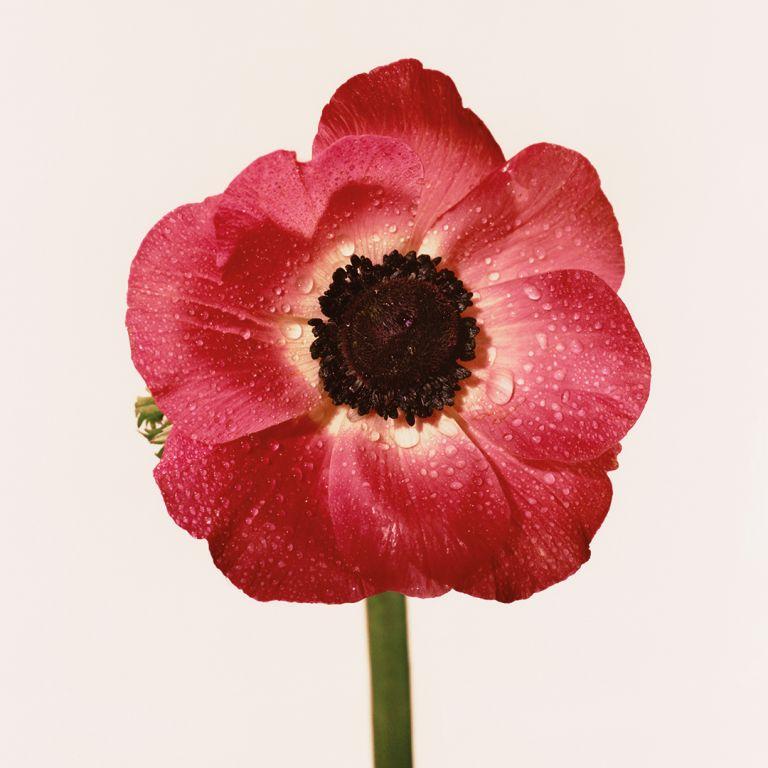 FLOWERDRP01