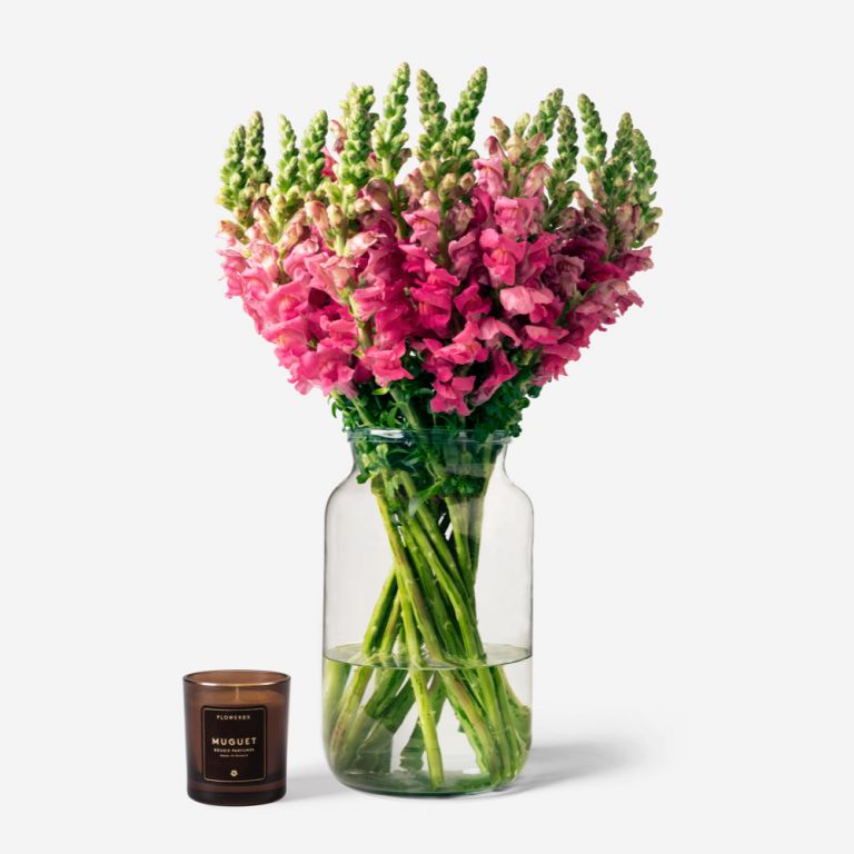 Vase Set Cotton Candy Snapdragon