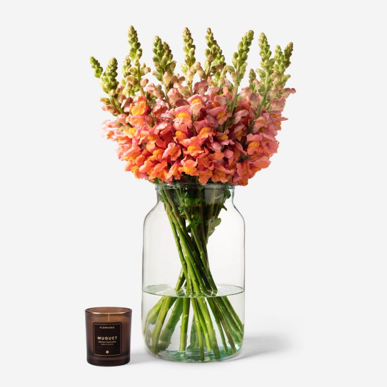 20 stems in a Medium Apothecary vase