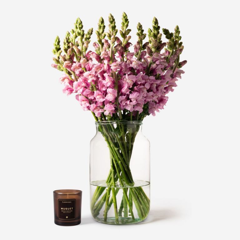 Vase Set Lavender Pink Snapdragon