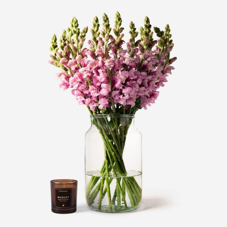 Lavender Pink Snapdragon