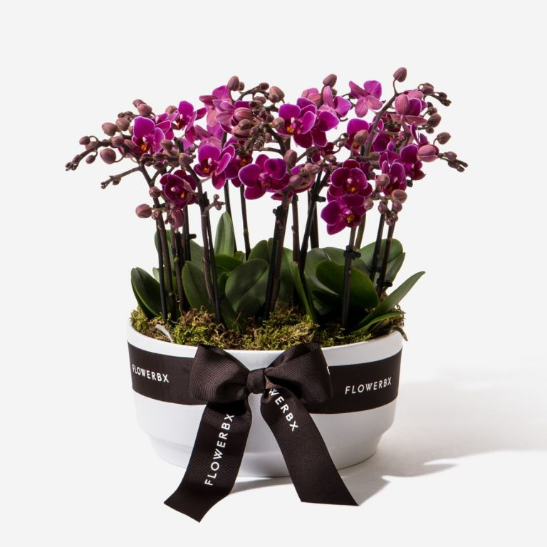 Deep Violet Mini Orchid Planter