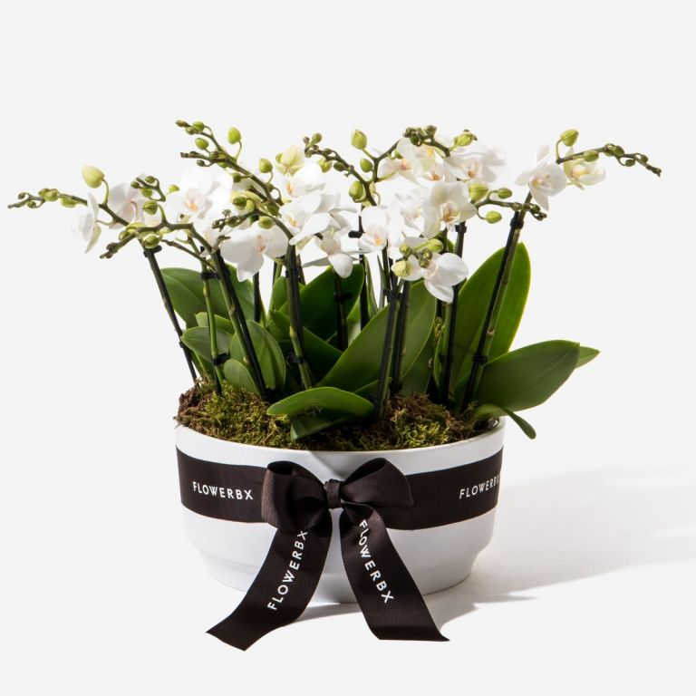 Alpine White Mini Orchid Planter