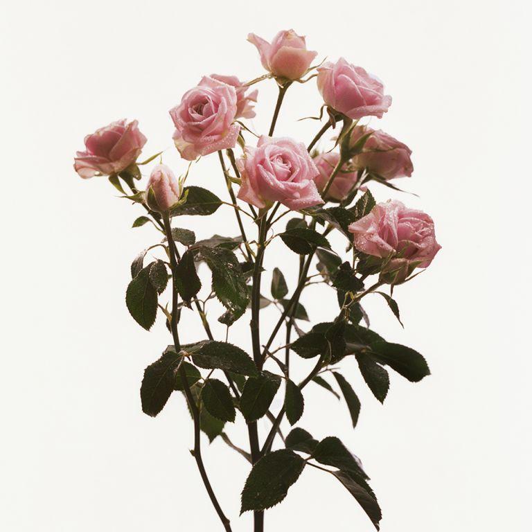 FLOWERDRP05