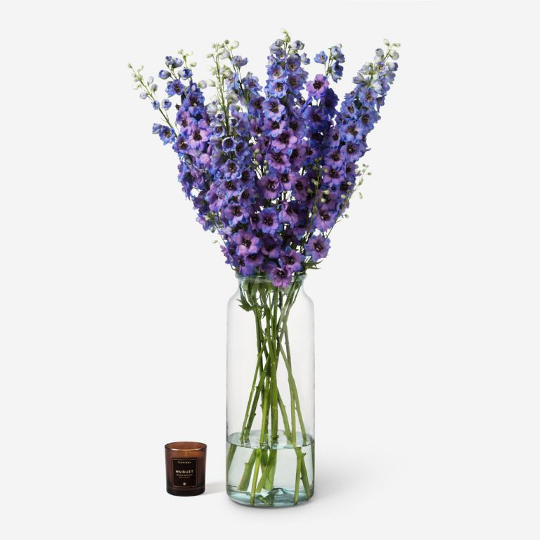Grape Punch Delphinium