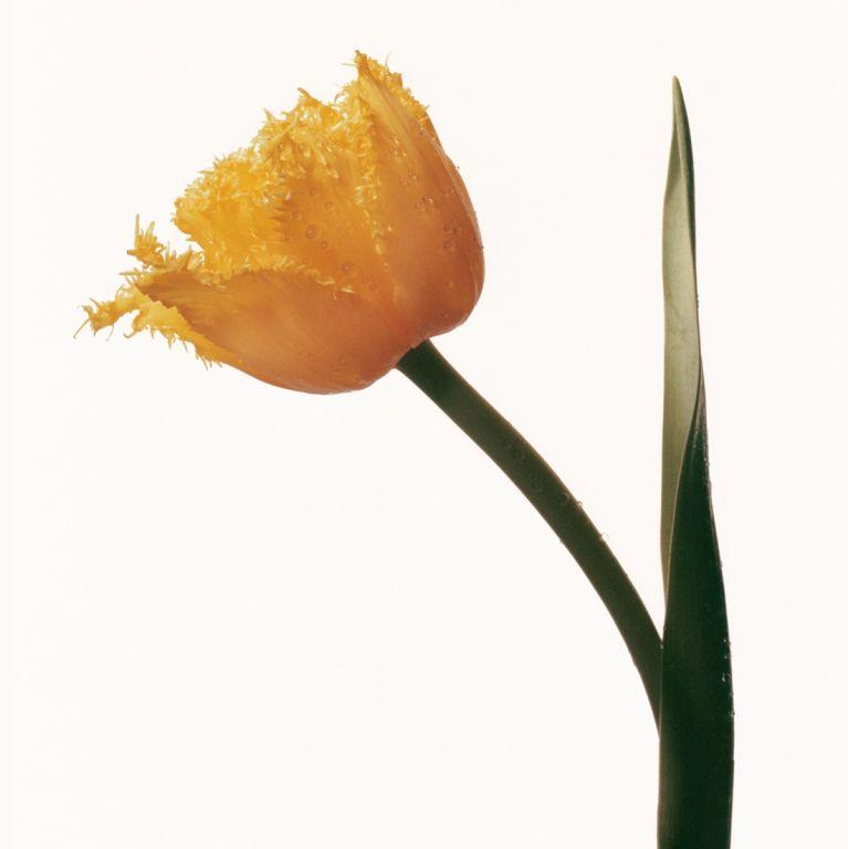 FLOWERDRP02