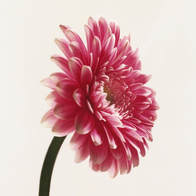 FLOWERDRP04