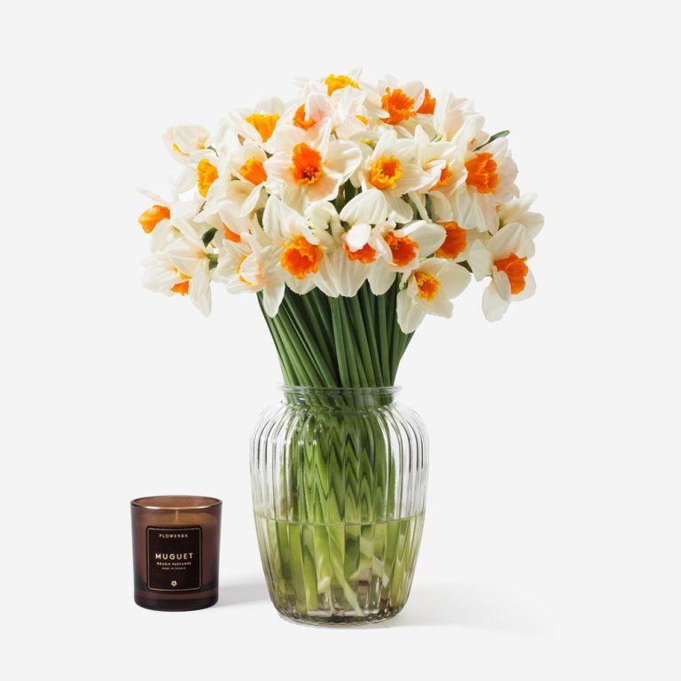 Over Easy Daffodil