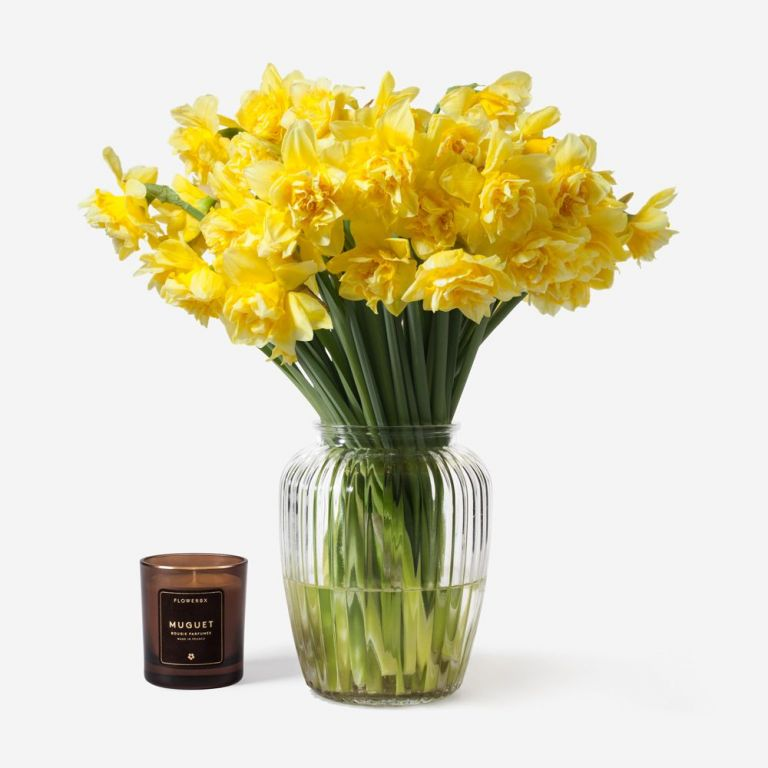 Buttery Blonde Daffodil