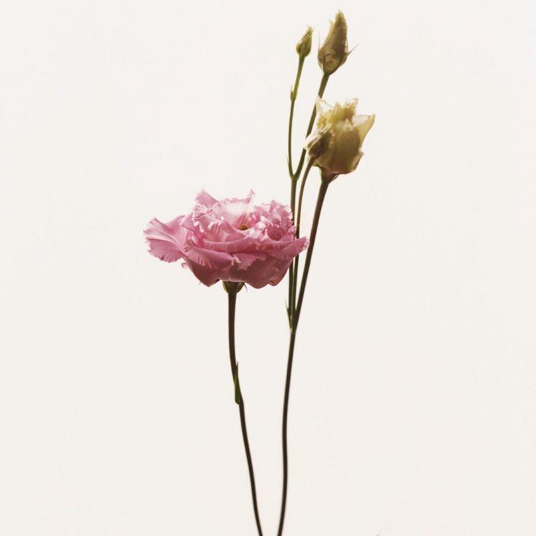 FLOWERDRP06