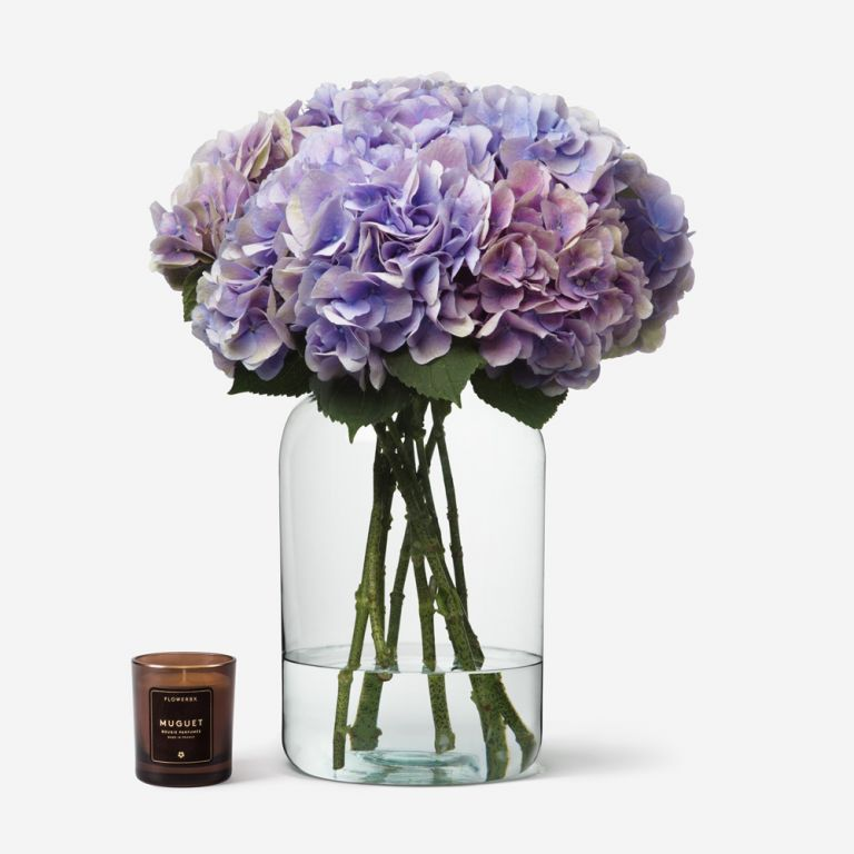 Lavender Blush Hydrangea