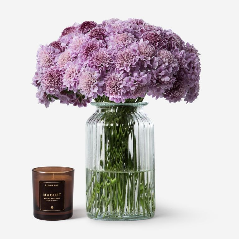 Lovely Lilac Scabiosa
