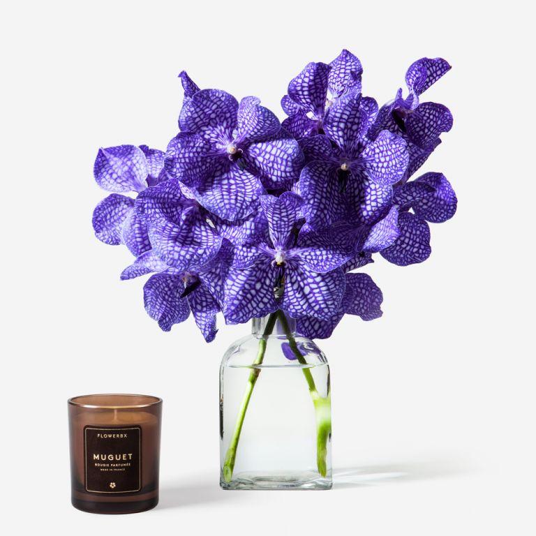 Delft Blue Vanda Cut Orchid