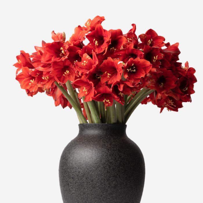 Large Mayfair and Petit Amaryllis Vase Set