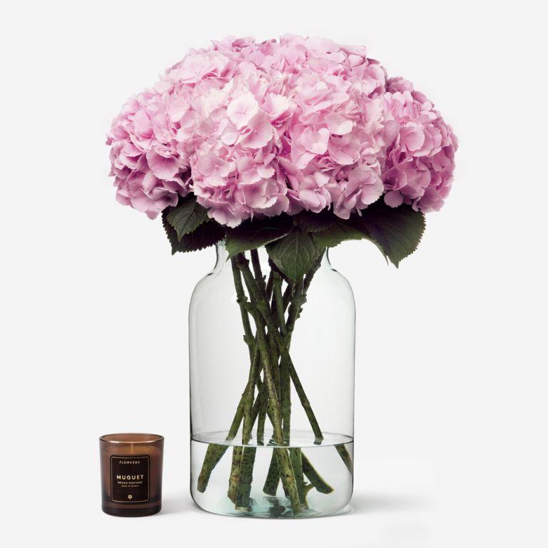 Vase Set Hydrangeas and Apothecary