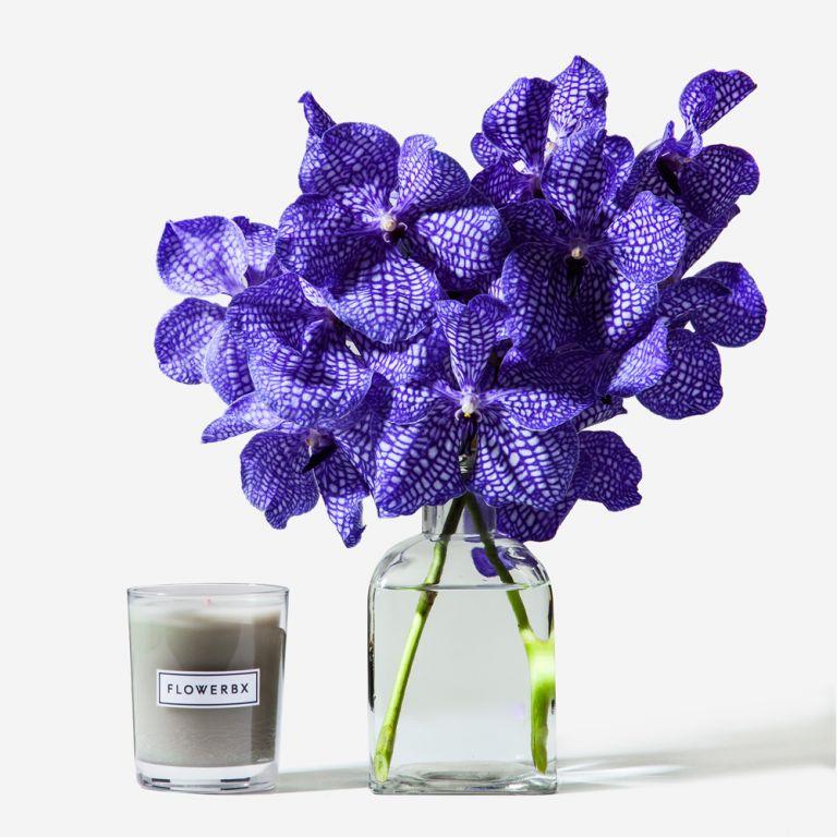 Lilac Dust Vanda Cut Orchid