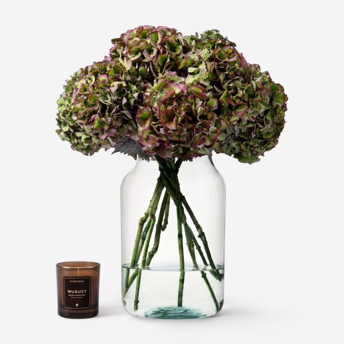 Lime Kiss Hydrangea in a Large Apothecary vase
