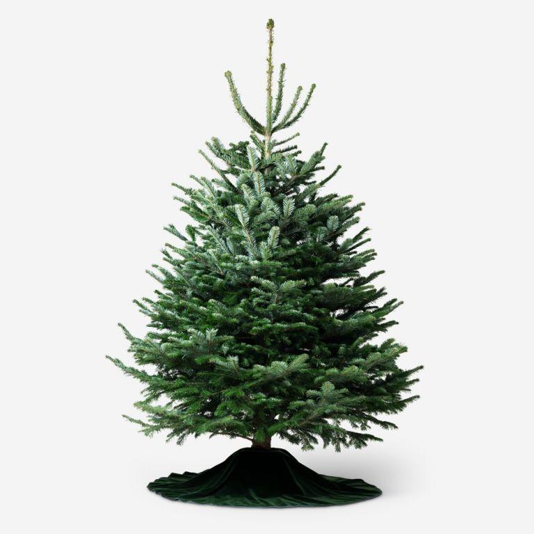 Traditional Fir Christmas Tree
