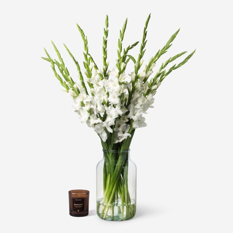 White Wedding Gladiolus