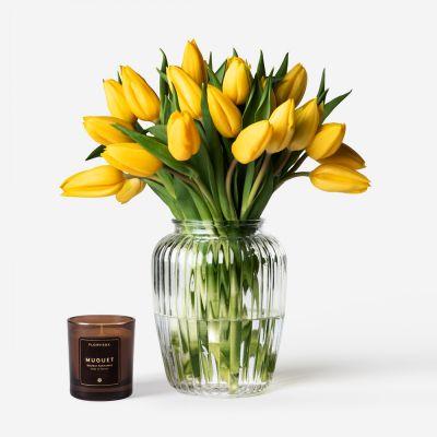 Canary Dutch Tulip