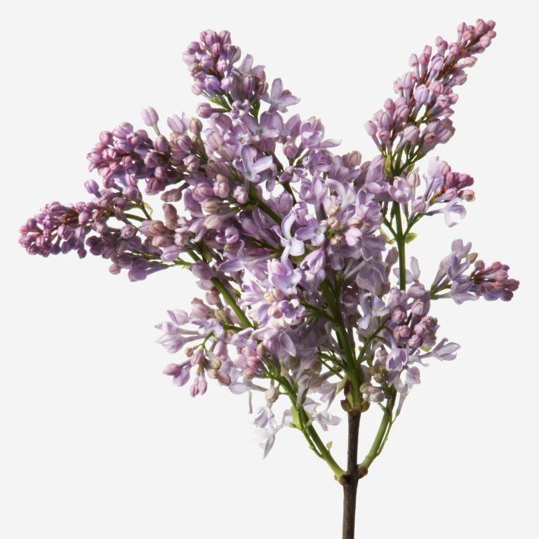 Vase Set Lilac Lilac