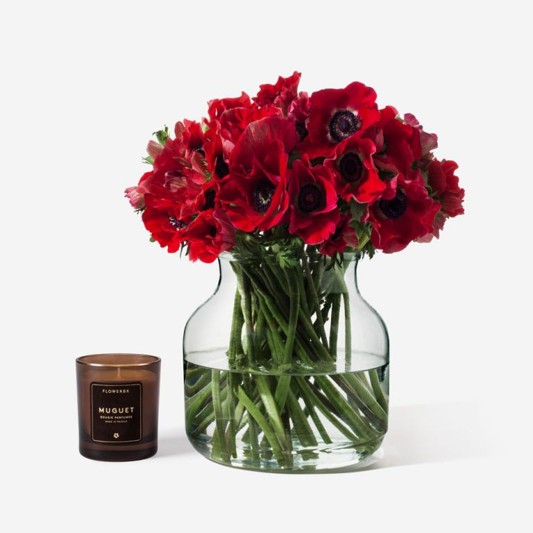 Lipstick Red Anemone