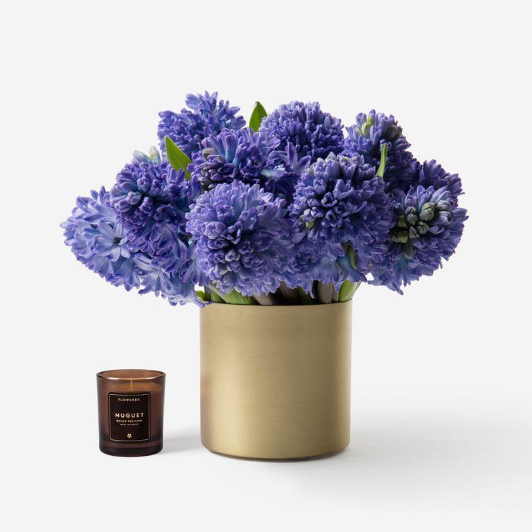 Twilight Hyacinth