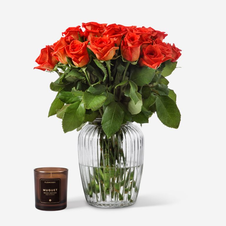 Orange Naranga Rose