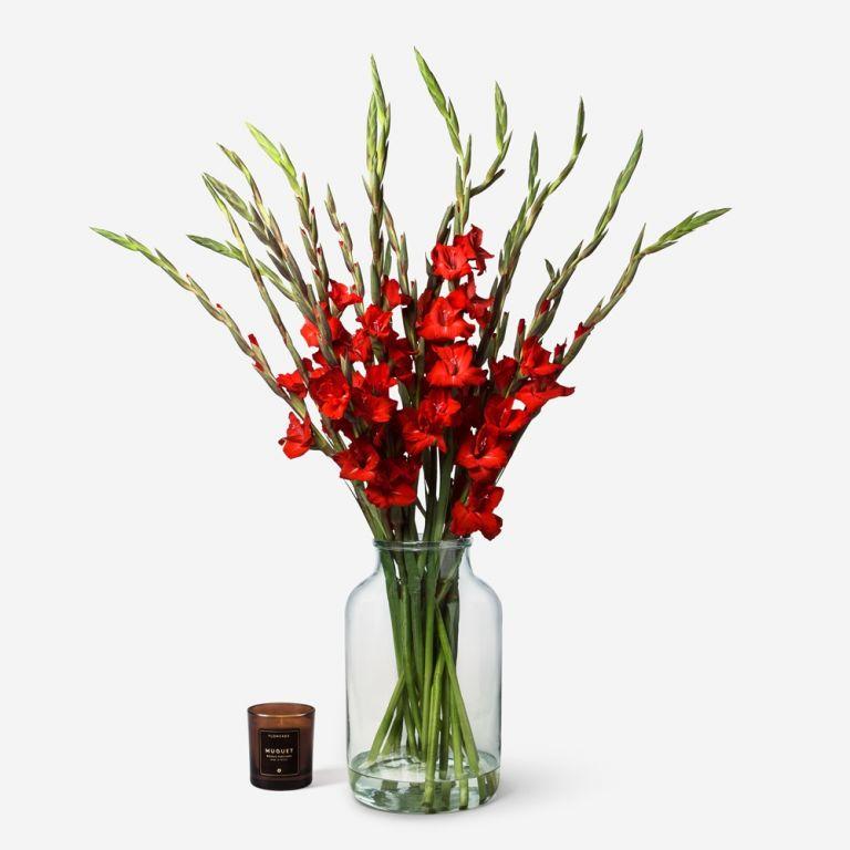 Ladybird Gladiolus