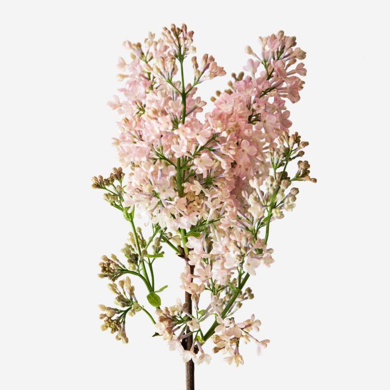 Vase Set Maiden's Blush