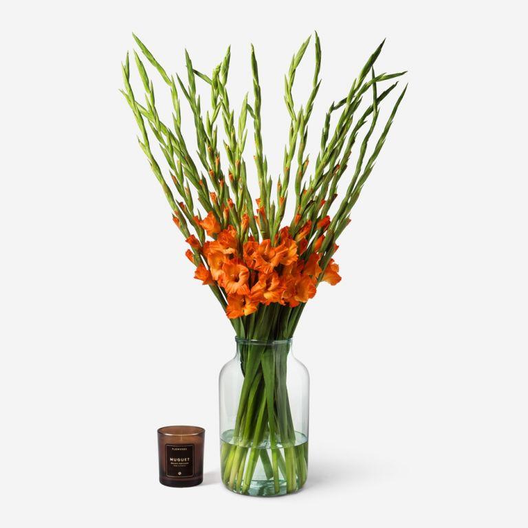 Orange Crush Gladiolus