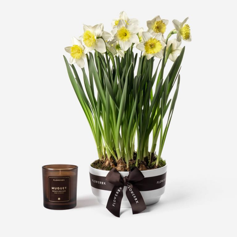 Sunny Side Up Narcissus Spring Bulbs
