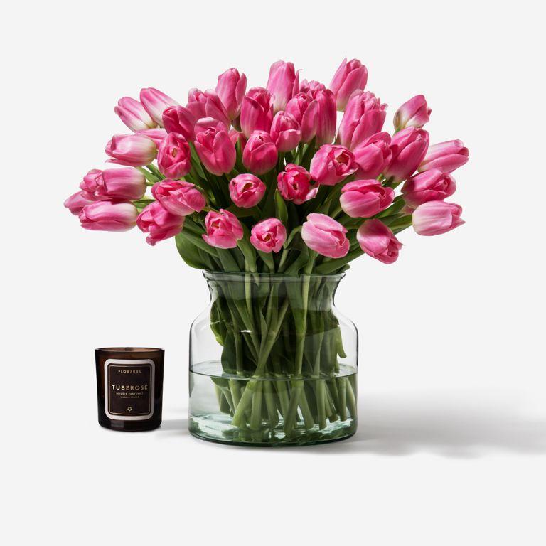 French Kiss Dutch Tulip