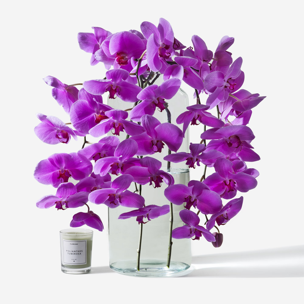Magenta phalaenopsis cut orchid this product is made up of 4 stems reviewsmspy