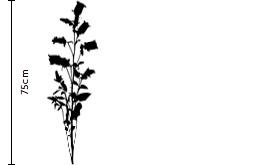 Lavender Campanula Gift | FLOWERBX