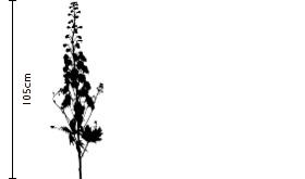 Marshmallow Delphinium | FLOWERBX