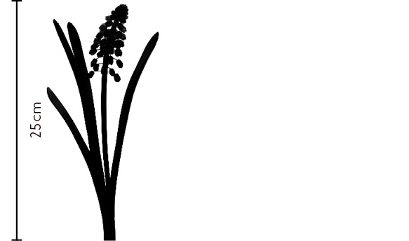 Wedgewood Muscari | FLOWERBX