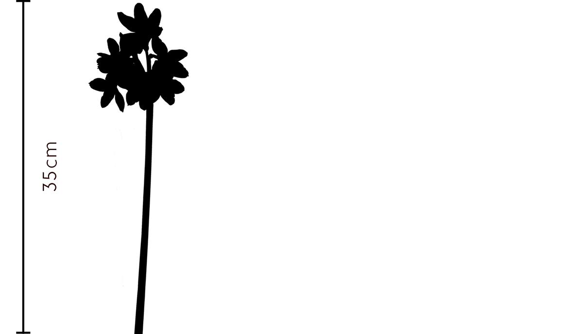 Paperwhite Narcissus Gift | FLOWERBX